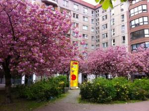 Berlin_japanske kirsebærtræer