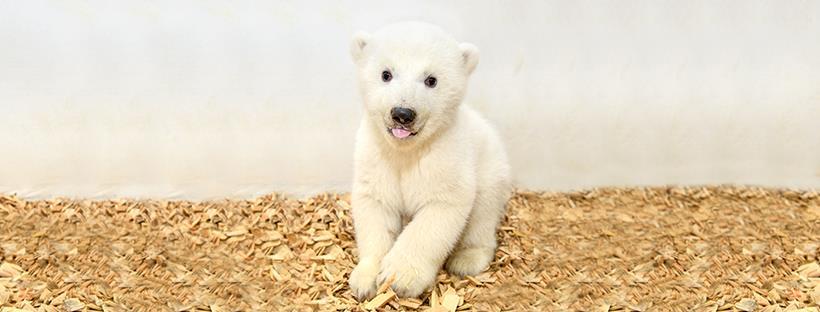 Eisbär Tierpark Berlin 2019